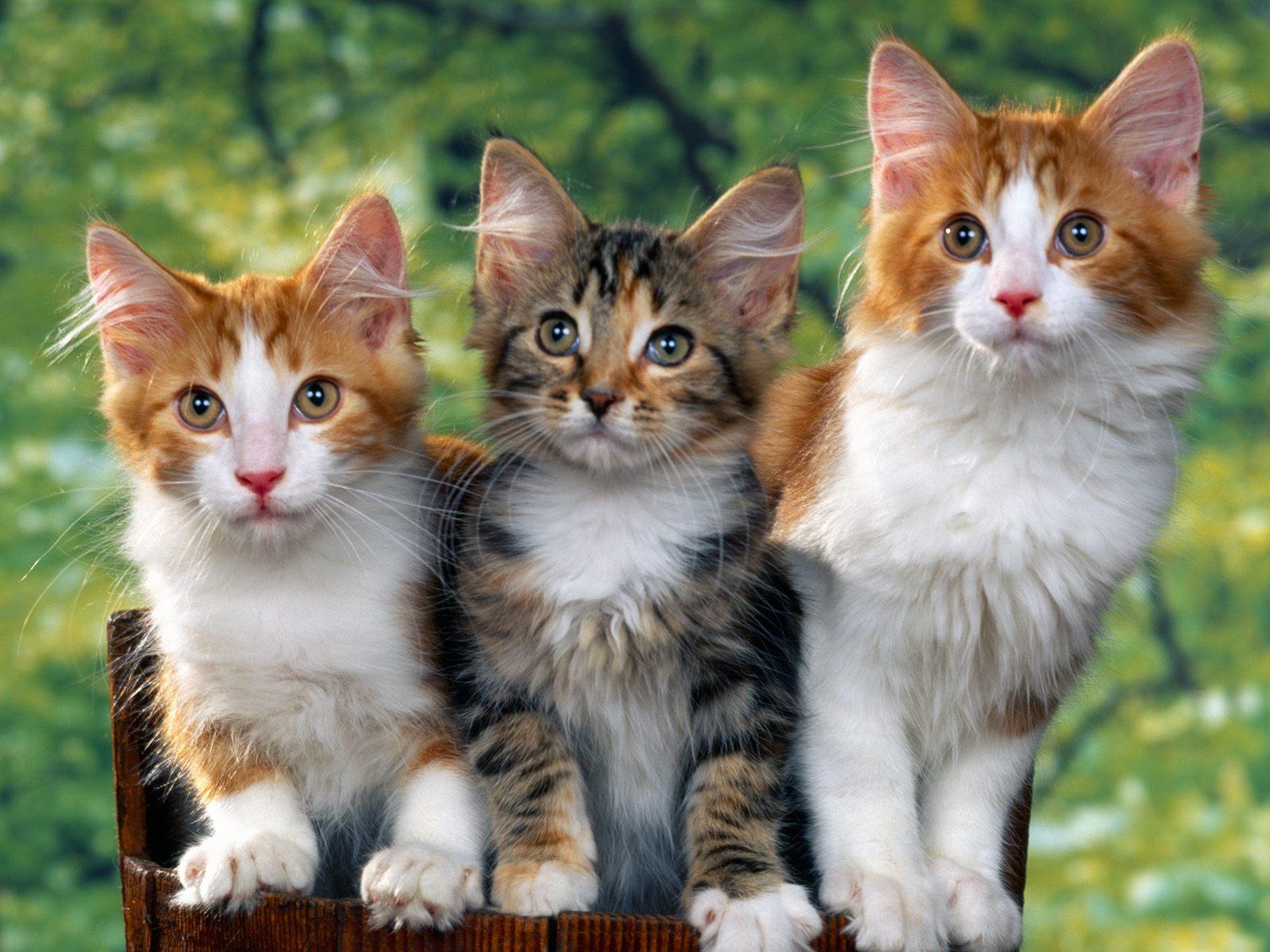 penjualan kucing