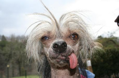 Ugly Mexican Pictures http://forteanzoology.blogspot.com/2009/04/richard-freeman-ugly-dogs-and-ugly-cats.html