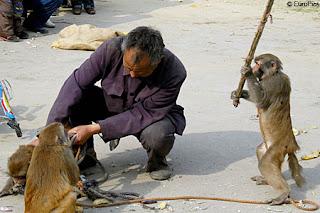 kungfu monyet