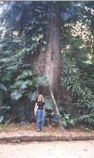 Ainda a Amazônia