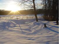 Sunrise over frozen Boorman Creek pond