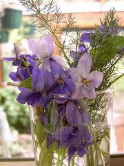 Violetas