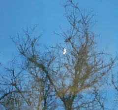 The Moon's Caught in the Tree.