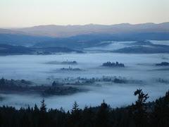 Laurelwood Fog