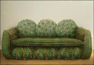 A cactus couch.