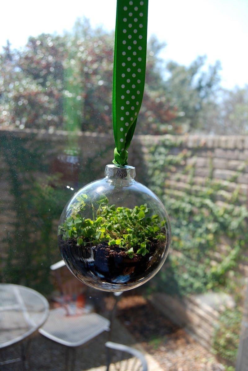 Semillasmagicas jardines en miniatura for Jardines en miniatura