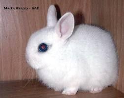 Splenditi criceti - Lettiera coniglio nano ...