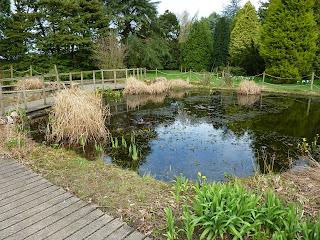 The arboretum pond