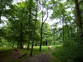 Marles Wood near Ribchester