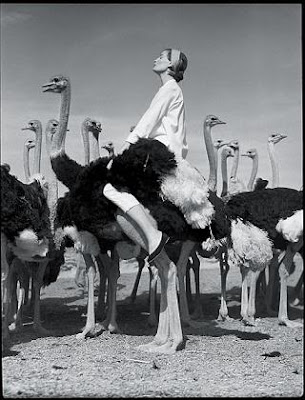 Norman_Parkinson_fashion_photography@http://marielscastle.blogspot.com