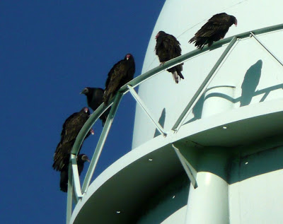 buzzards on water tower