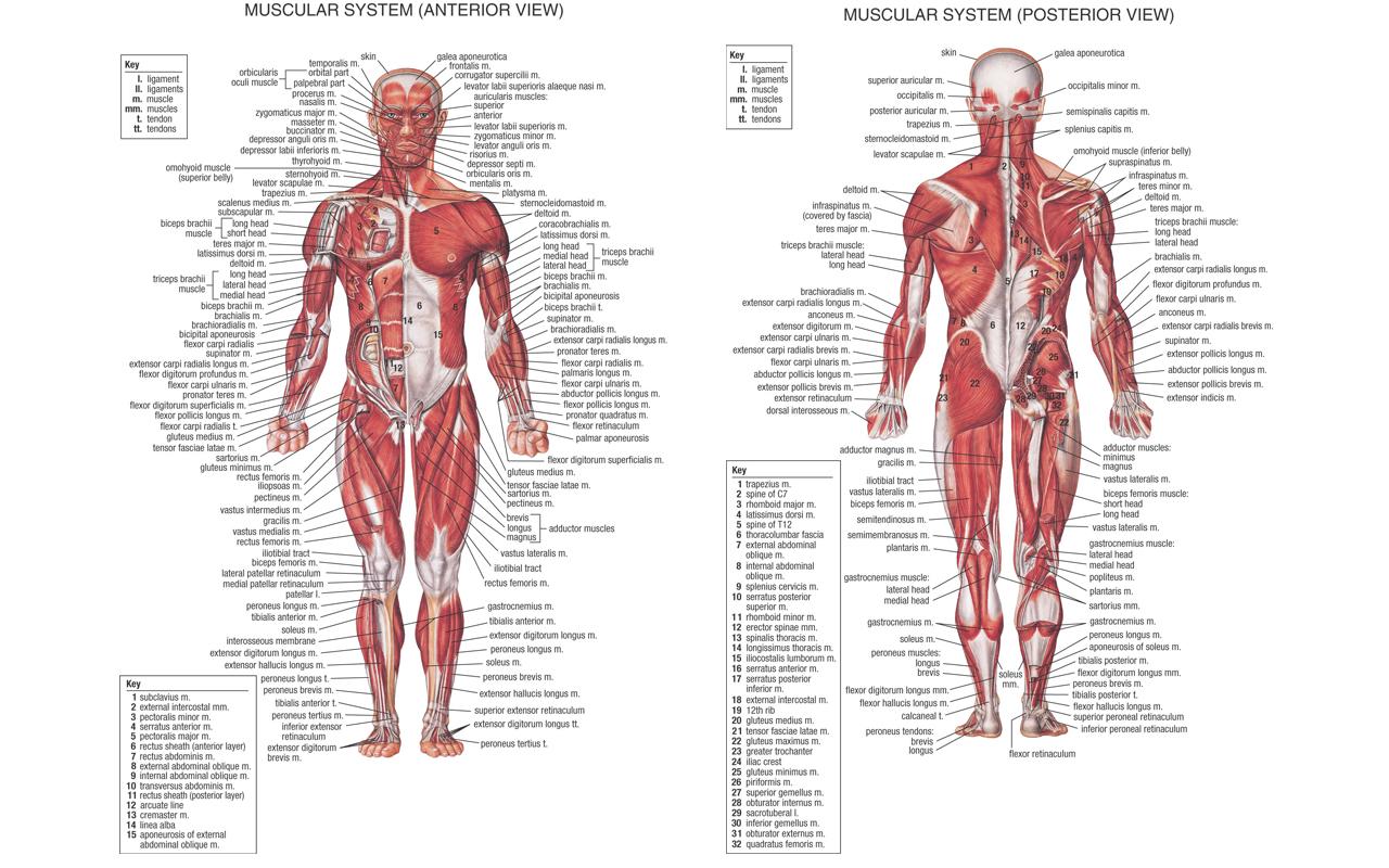 http://3.bp.blogspot.com/_XWSmFA2brwM/TVL4bq6FrhI/AAAAAAAAB28/uSy_VksNzrw/s1600/Anatomy_1280x800%2528Laptop%2529.jpg