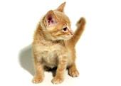 Apadrinhamento da Toca dos Gatinhos