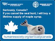 Se il Canada cancellasse la caccia alle foche...