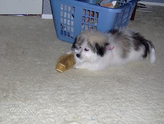 Puppy Friday vol. XV