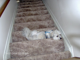 Nisie Resting on the Stairs
