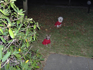 Jake and Nisie Outside for Halloween