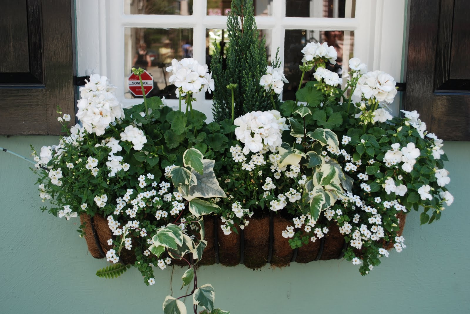 plants and containers charleston window boxes. Black Bedroom Furniture Sets. Home Design Ideas