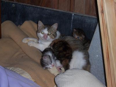 Maman chatte et ses petits au repos