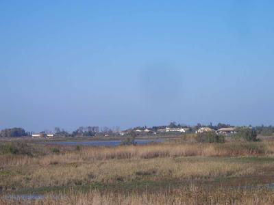 Aspect de la Camargue fluvio-lacustre