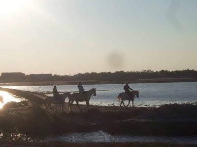 Ballade à cheval au coucher du soleil aux Saintes-Maries de la mer Camargue