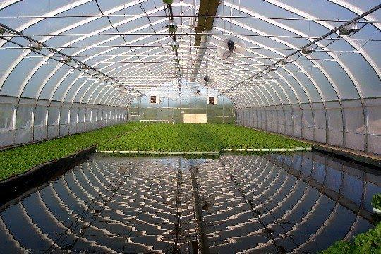 Greenhouse Aquaculture