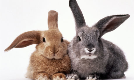 Research paper on rabbits