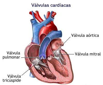 blog sobre el corazón Tu corazón, el