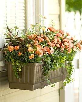 Self-Watering Windowbox