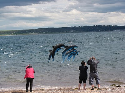 Dolphins at Fortrose -- Click to enlarge