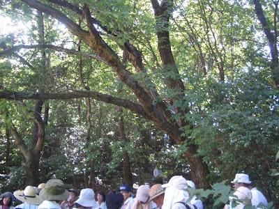 コナラの木陰