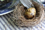 "Please visit me at my other blog: ""In The Sunny Spot""! just click on the bird's nest below..."