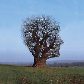 Pink+Floyd+Tree+Half+Life+1997.jpg