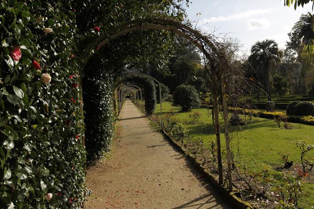 Ruta de los jardines de invierno las camelias for Jardines galicia