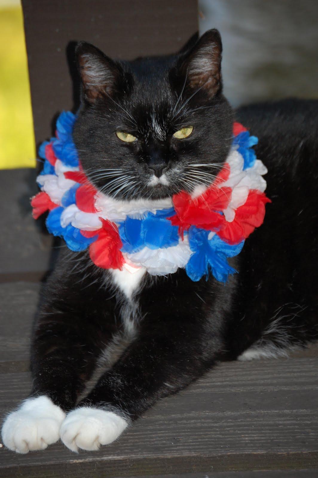 Mirmo Gambar Kucing Pakai Kostum