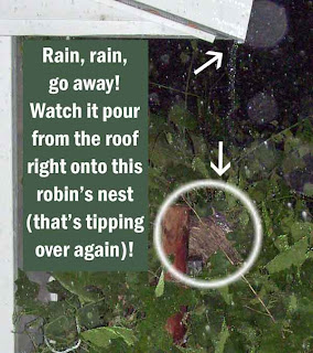 See the details of this robin's predicament.