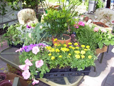 Our patio table is filled with plants from the garden center awaiting placement into their garden beds.