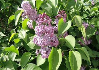 lilac (onemorehandbag)