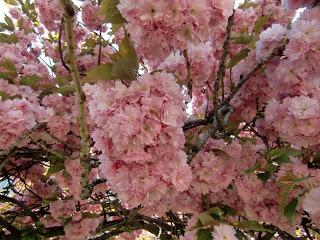 cherry blossom explosion (onemorehandbag)