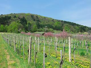 vinyeard (onemorehandbag)