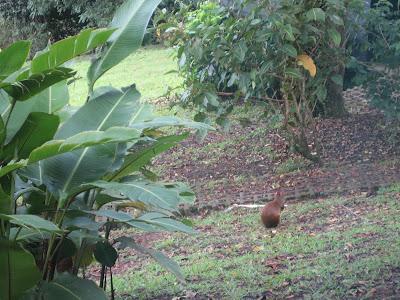 Treasures of Monteverde Cloud forest 5