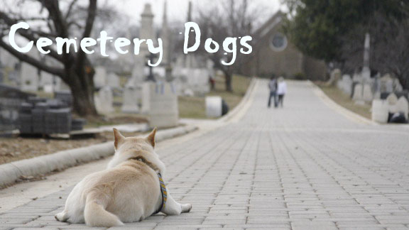 Cemetery Dogs