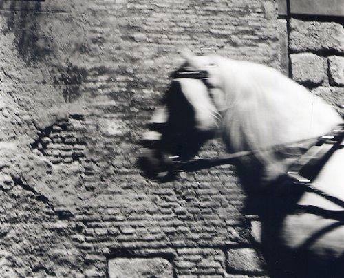 [Sevilla+caballo]