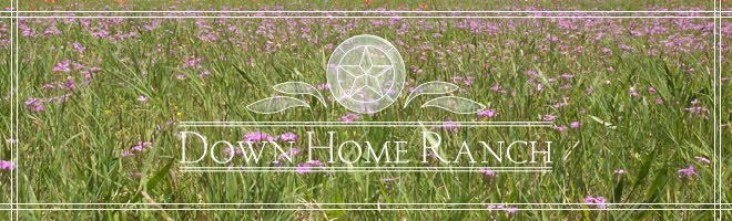 Down Home Ranch Blog
