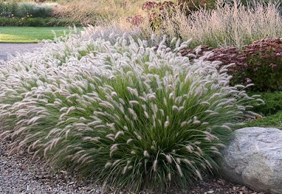 Country gardener six plants i can 39 t live without for Ornamental grasses that grow in shade