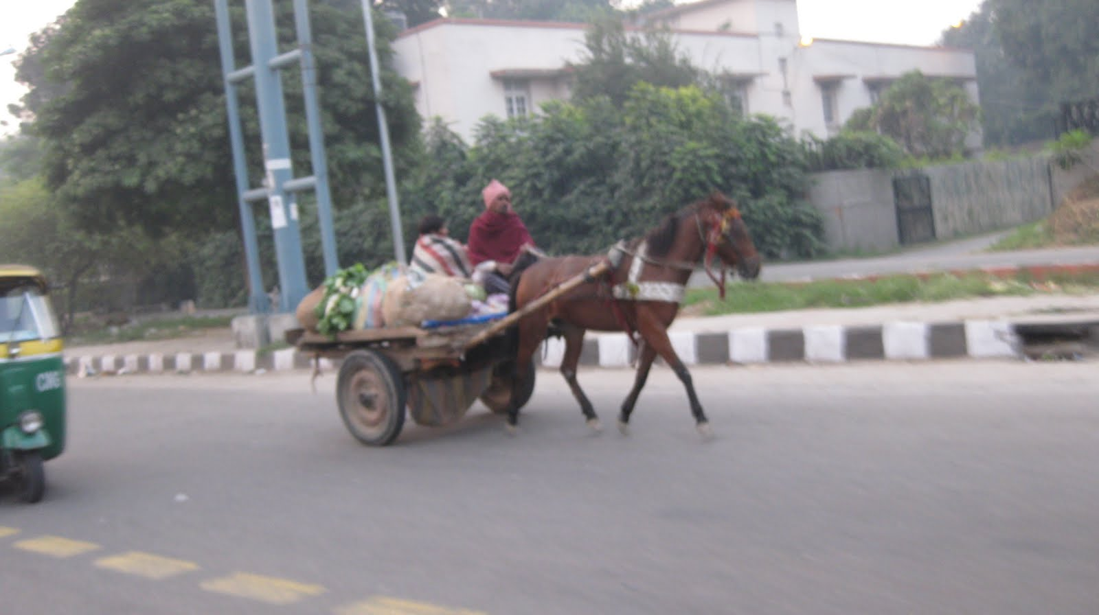 animal powered transportation A working animal is an animal, usually domesticated  others may be used as pack animals, for animal-powered transport, the movement of people and goods.