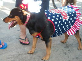 Missy the Patriotic Pooch