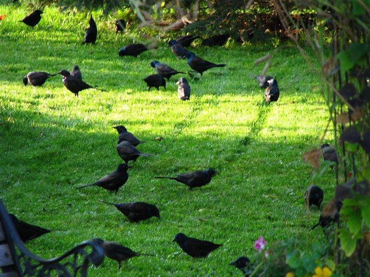 [1+The+Birds]