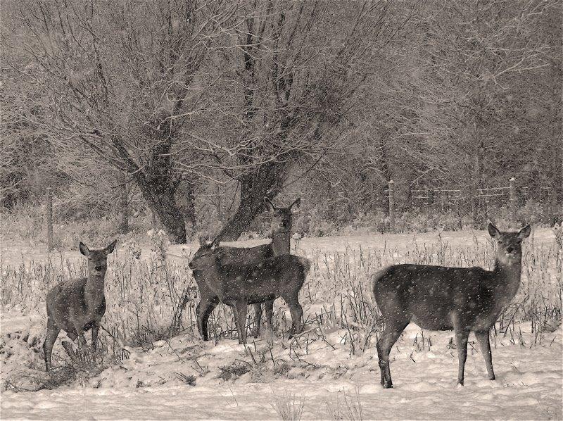 [sepia++scenes+deer+750+]