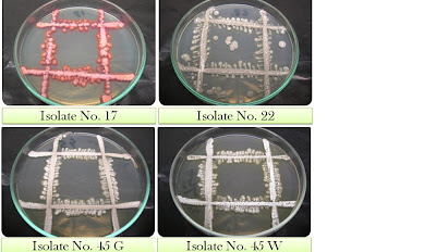 isolation of streptomyces Streptomyces isolated from soil samples of periyar lake, kumily  this study attempted for the isolation and screening of an anti-cancer enzyme l-asparaginase.
